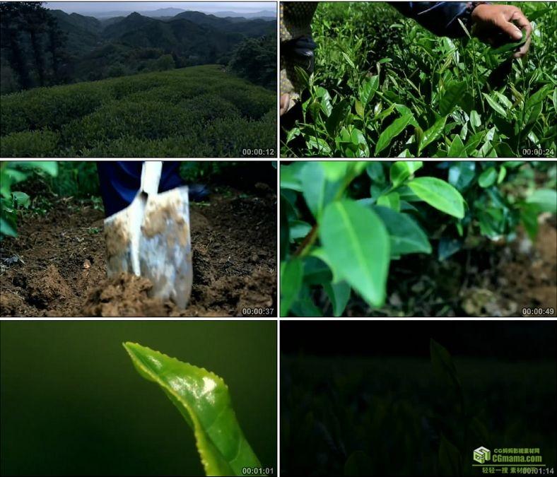 YC0056-独山景色茶树茶叶茶园特写/采茶/中国高清实拍视频素材下载