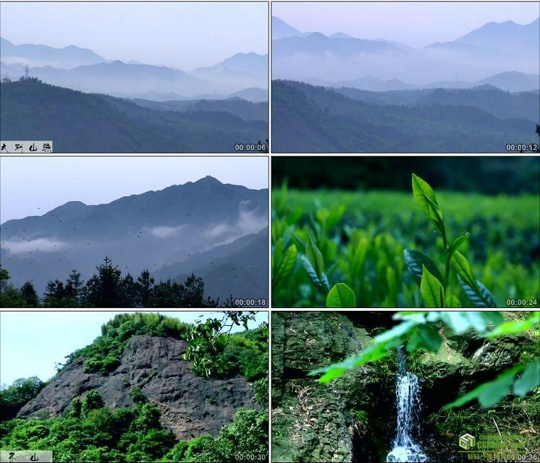 YC0062-齐山大别山景色茶树茶叶/中国高清实拍视频素材下载