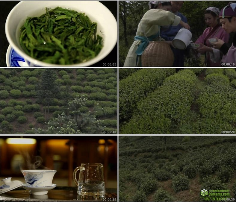 YC0063-古人喝茶六安茶叶茶园茶树沏茶泡茶茶叶/中国高清实拍视频素材下载