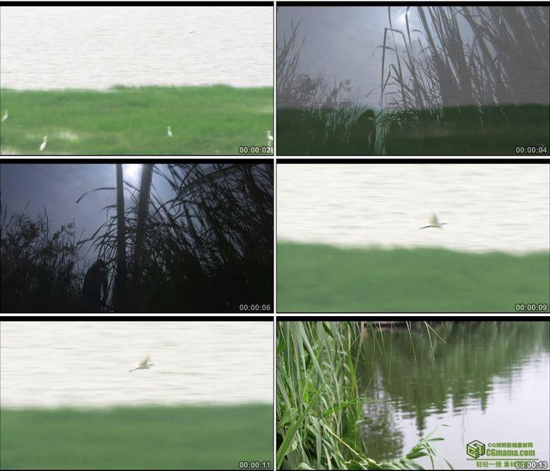 YC0103-水鸟一组/中国高清实拍视频素材下载