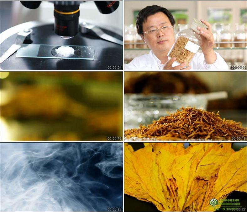 YC0211-烟叶的制作生产吸烟有害健康/科研实验/中国高清实拍视频素材下载