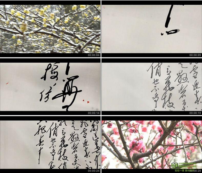 YC0252-朴算子咏梅书法手写雪中的梅花雪梅/中国高清实拍视频素材下载