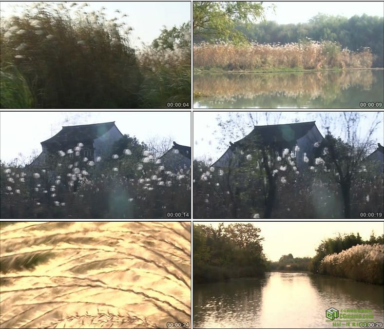YC0254-划船泛舟两岸白色芦花芦苇/中国高清实拍视频素材下载