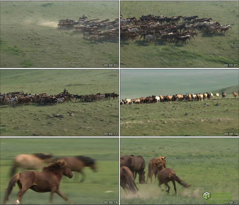 YC0393-辽阔草原牧场奔驰的马群万马奔腾骏马高清实拍视频素材下载