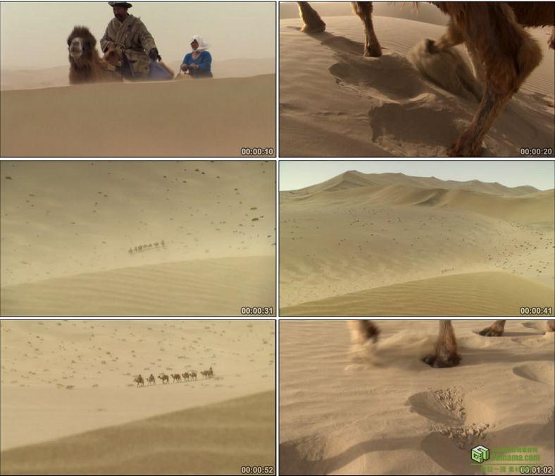 YC0538-沙漠之舟骆驼商队丝绸之路中国高清实拍视频素材下载