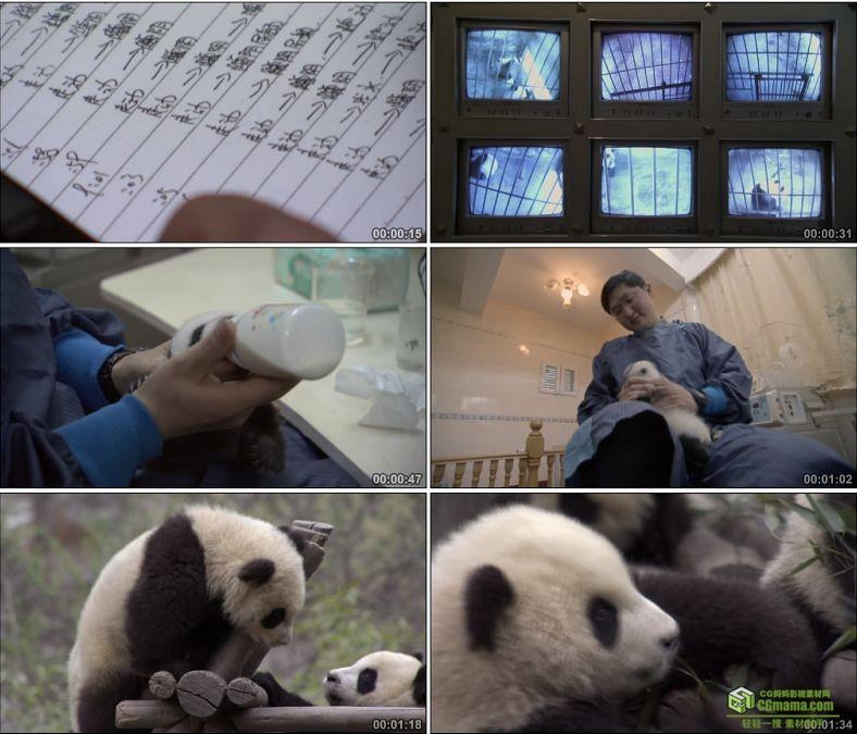 YC0570-动物园熊猫饲养员小熊猫喝奶国宝中国高清实拍视频素材下载