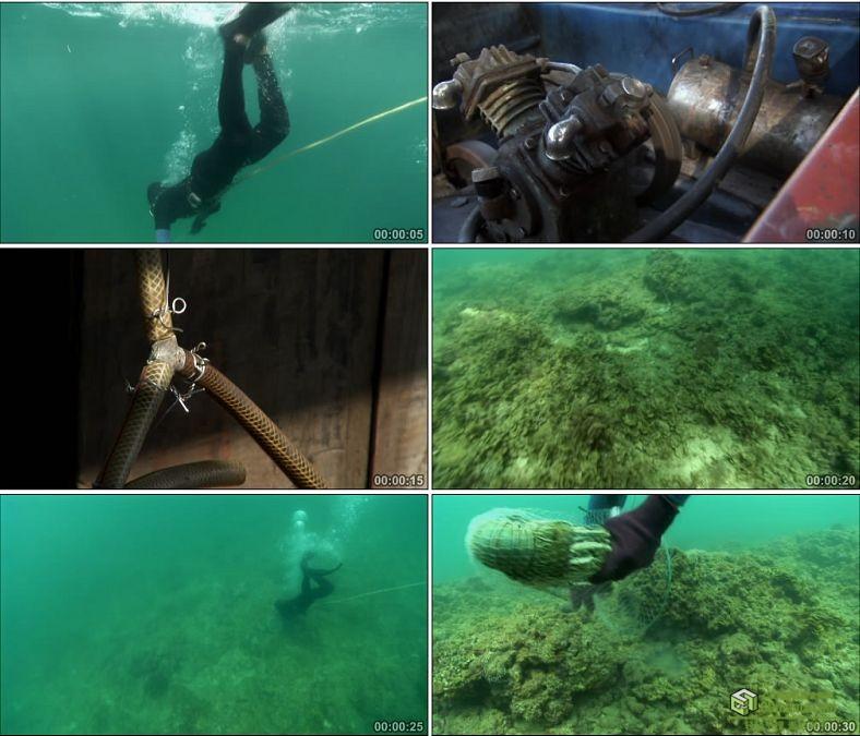 YC0708-潜水员潜水镜头捕捉大龙虾中国高清实拍视频素材下载