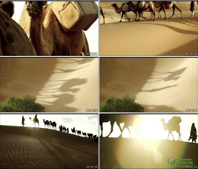YC0797-骆驼商队丝绸之路沙漠之舟中国高清实拍视频素材下载