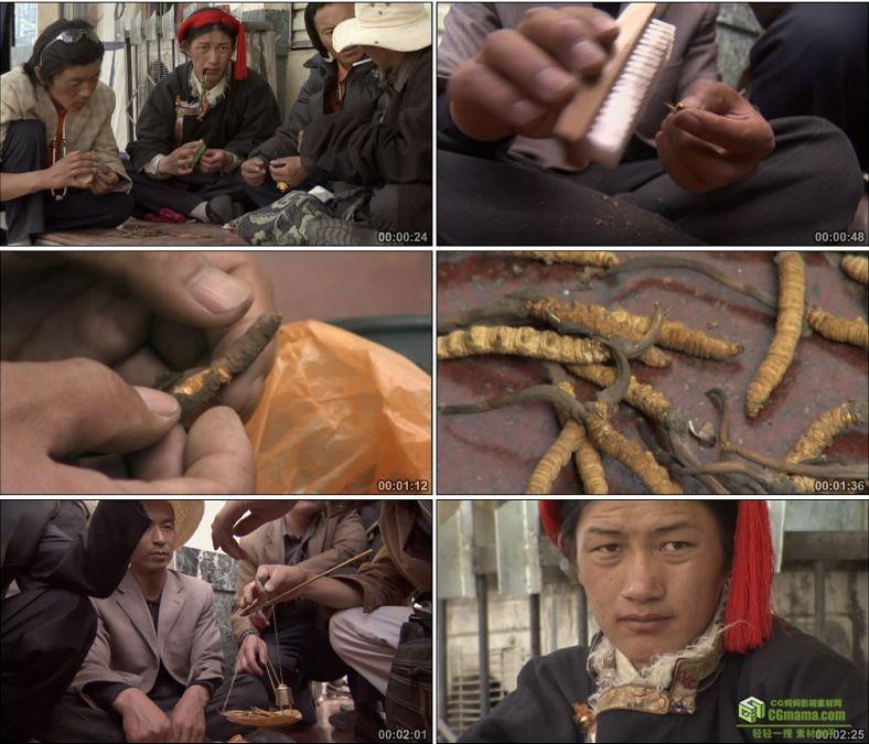 YC0804-西藏藏民销售收购中药冬虫夏草数钱集市专营店高清实拍视频素材下载