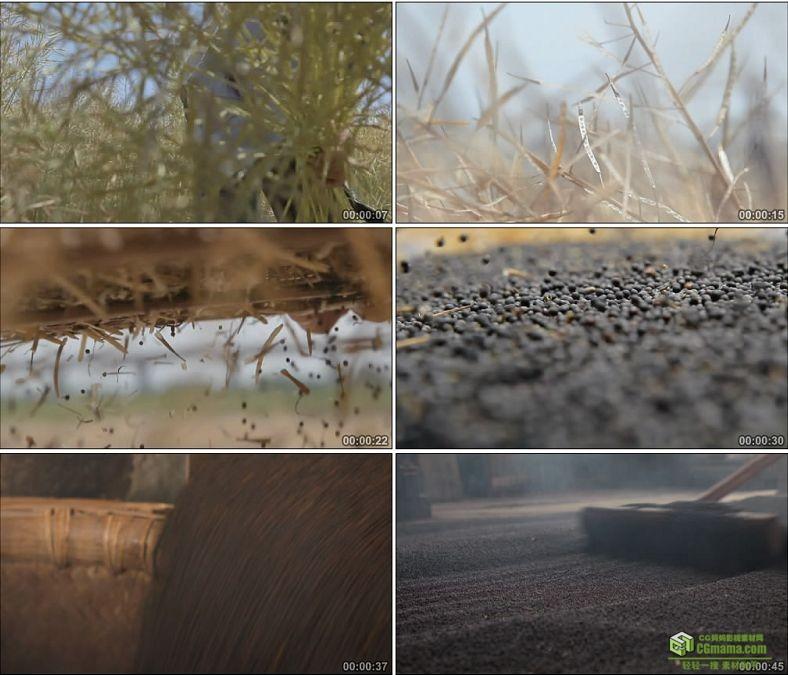 YC0814-油菜籽的收获和炒制农民收获粮食筛粮食中国高清实拍视频素材下载