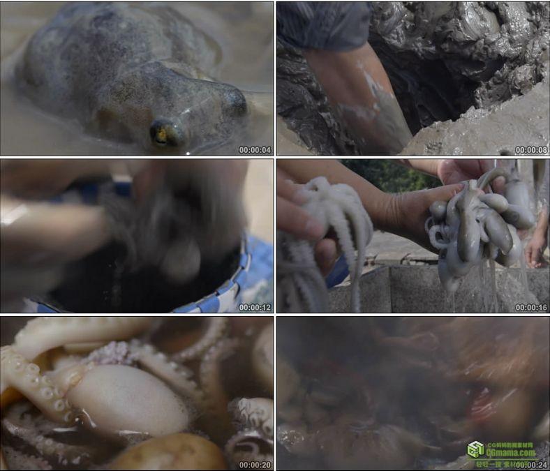 YC0881-挖淤泥捉望潮小章鱼烹饪烧制美食高清实拍视频素材
