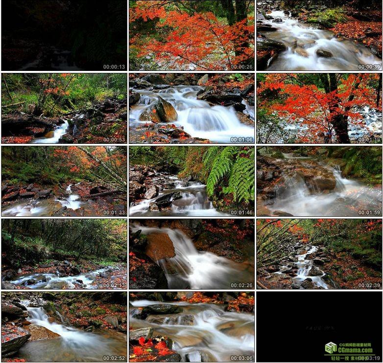 AA0084-延时摄影—红色枫叶流水秋天小溪高清实拍视频素材