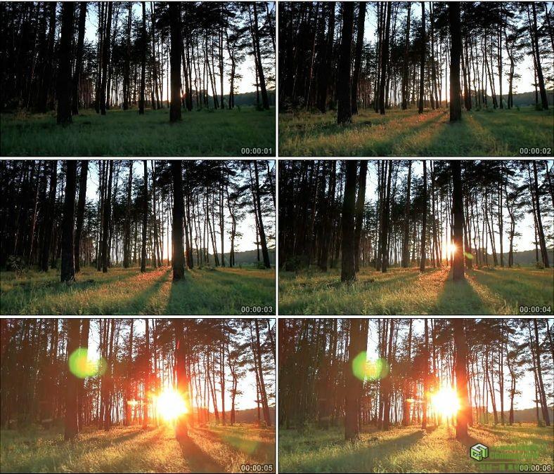 YC0936-阳光树林晨曦阳光光束自然风光高清实拍视频素材
