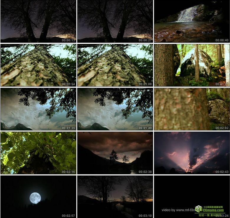 AA0114-基姆高印象大树森林高清实拍视频素材下载
