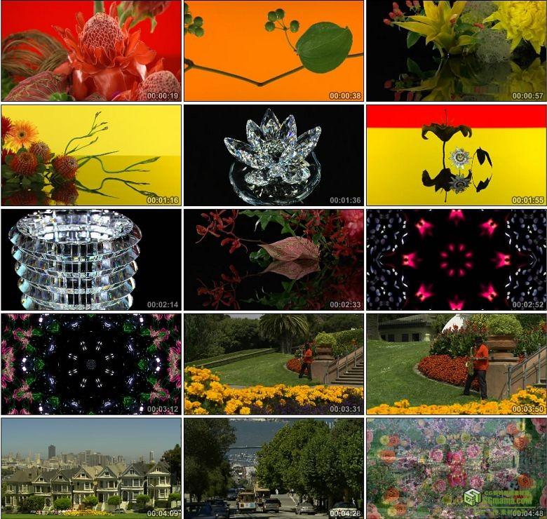 AA0260-夏普True Colors 1080P高清实拍视频素材鲜花城市