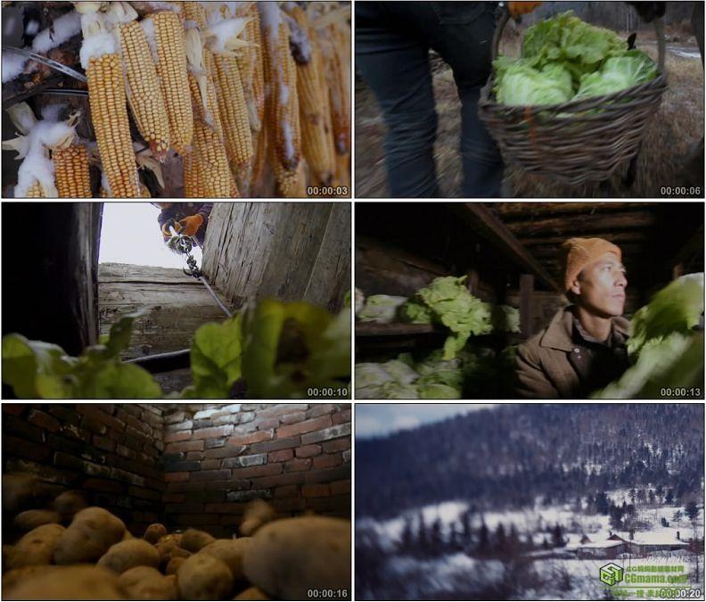 YC1151-东北玉米寒冷冬季地窖储藏白菜土豆食物高清实拍视频素材