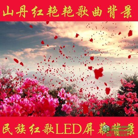 LED0054-映山红花瓣飘舞中国高清LED视频背景素材