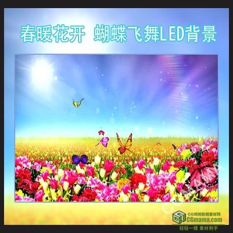 LED0057-春暖花开+蝴蝶飞舞鲜花高清LED视频背景素材