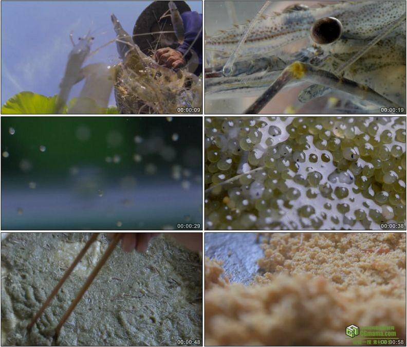 YC1200-夏日荷花湖虾产卵竹篓捕虾高清实拍视频素材