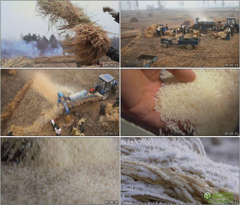 YC1208-小麦成熟收割脱壳产出雪白大米高清实拍视频素材
