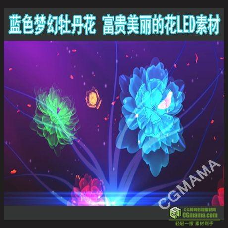 LED0166-牡丹花富贵 美丽的花开花瓣高清视频led屏幕背景素材