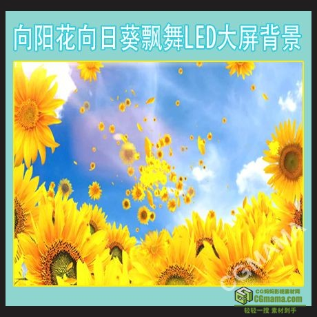 LED0188-向阳花向日葵飘舞led高清视频屏幕背景素材