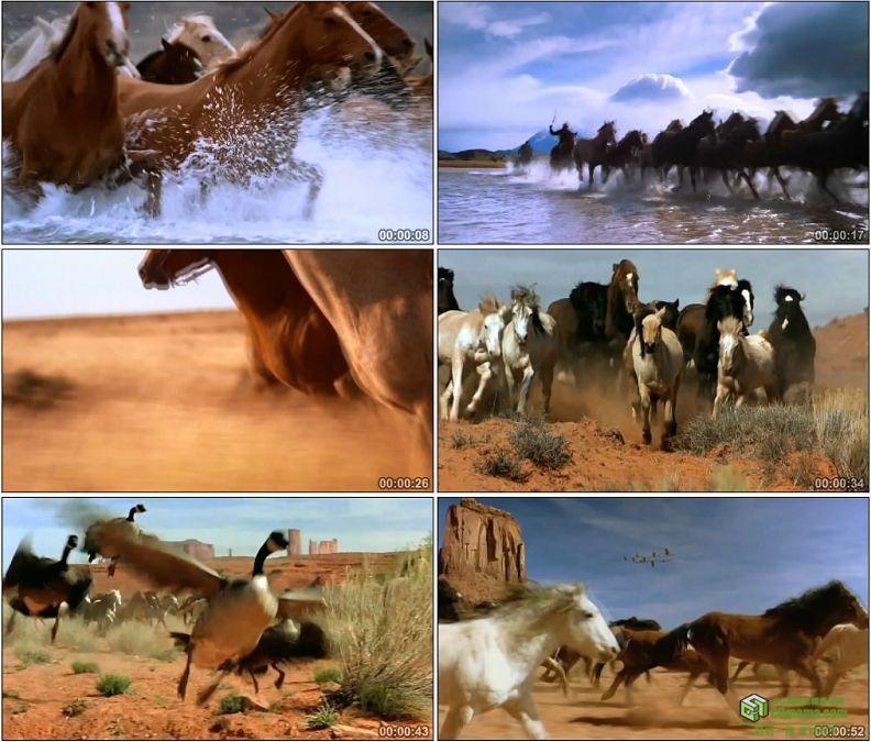 YC1286-西部牛仔万马奔腾草原高清实拍视频素材