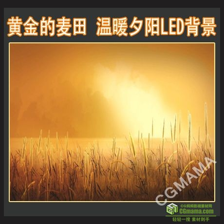 LED0437-金黄的麦田高清视频led背景素材