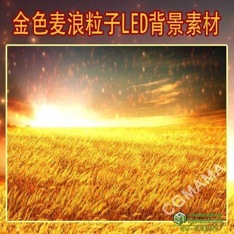 LED0494-金色麦浪无缝循环(有音乐)LED高清视频背景素材