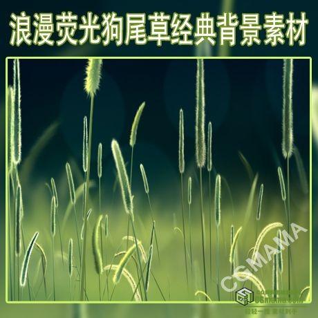 LED0495-浪漫荧光狗尾草经典LED高清背景视频素材