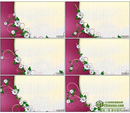 LED0566-半圆白色小花卷草写字板LED高清视频背景素材