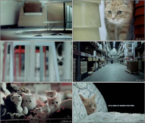TVC00156-Ikea宜家广告猫咪篇