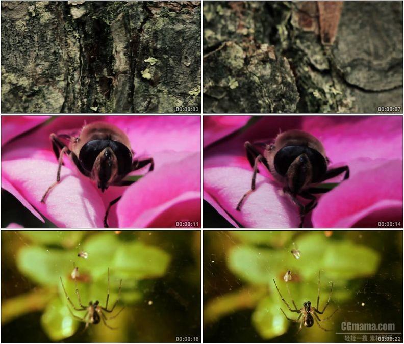 YC1895-昆虫蚂蚁爬树蜜蜂采蜜蜘蛛织网高清实拍视频素材