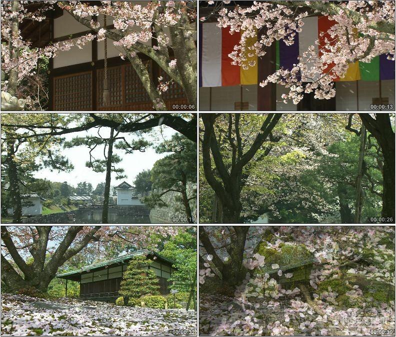 YC1974-美丽梦幻樱花树花瓣飘落特写镜头高清实拍视频素材