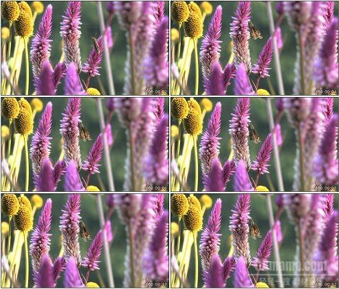 CG0011-紫色花朵植物镜头特写高清实拍视频素材