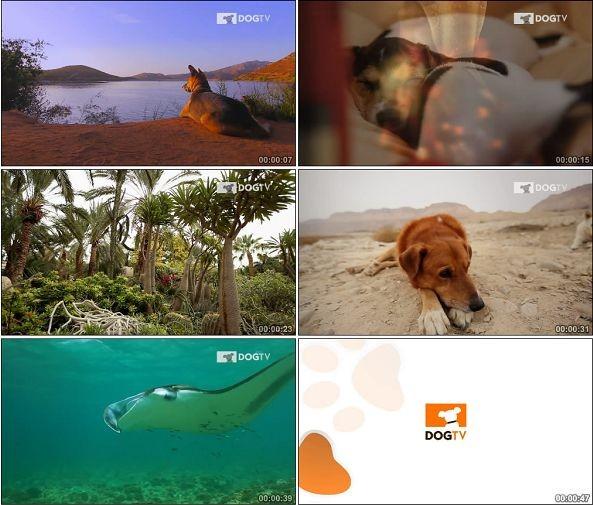 TVC01451-DirecTV - DogTV.720P