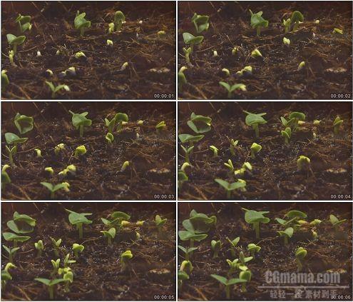 CG0072-植物从地下迅速冒出绿芽镜头特写高清实拍视频素材