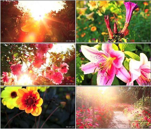 CG0115-梦幻的莫奈秘密花园风光美景高清实拍视频素材