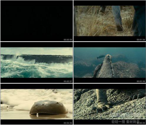 CG0126-大自然风光海洋及海洋生物拍摄高清实拍视频素材