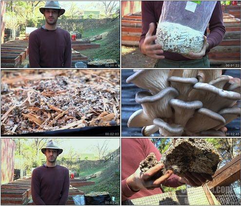 CG0224-实地考察美食食用菌栽培高清实拍视频素材