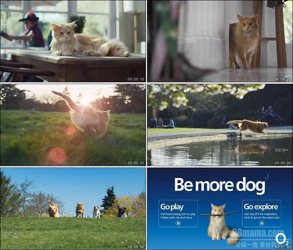 TVC01672-O2(通讯类) Be More Dog.1080P