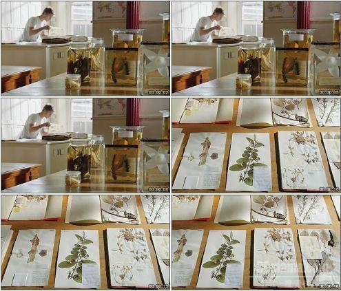 CG0385-外国实验室植物标本高清实拍视频素材