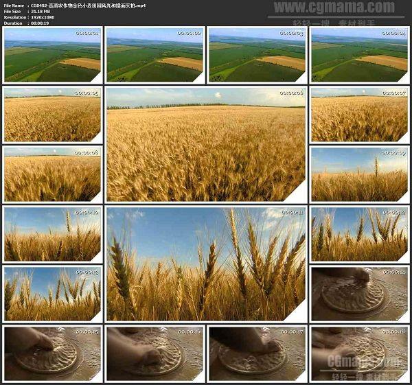 CG0402-高清农作物金色小麦田园风光和揉面高清实拍视频素材