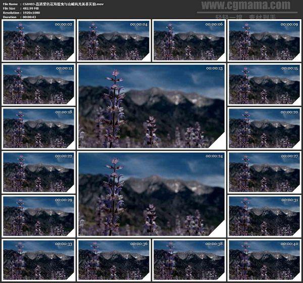 CG0403-高清紫色花海摇曳与山峰风光美景高清实拍视频素材