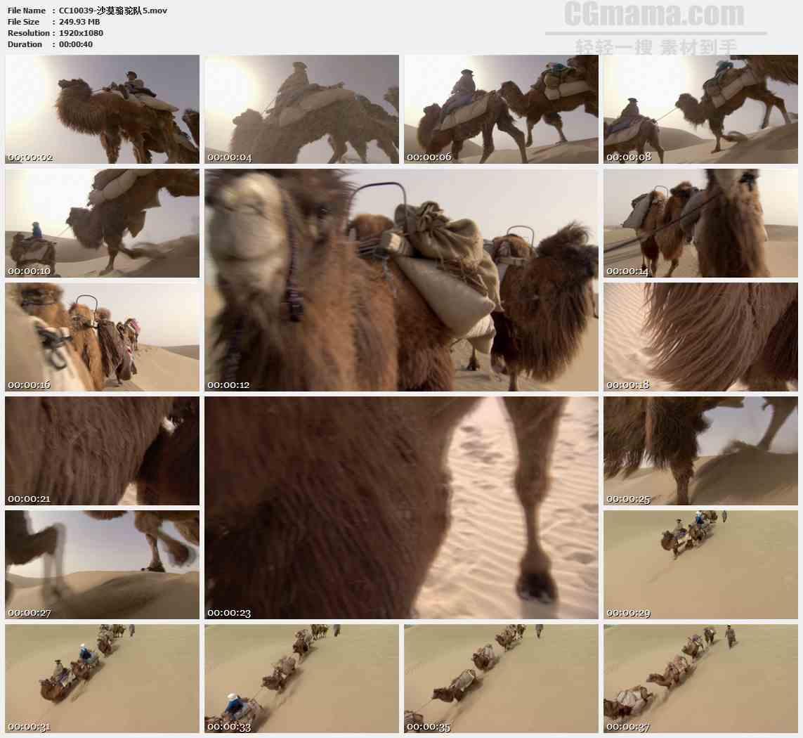 CC10039-沙漠骆驼队特写高清实拍视频素材