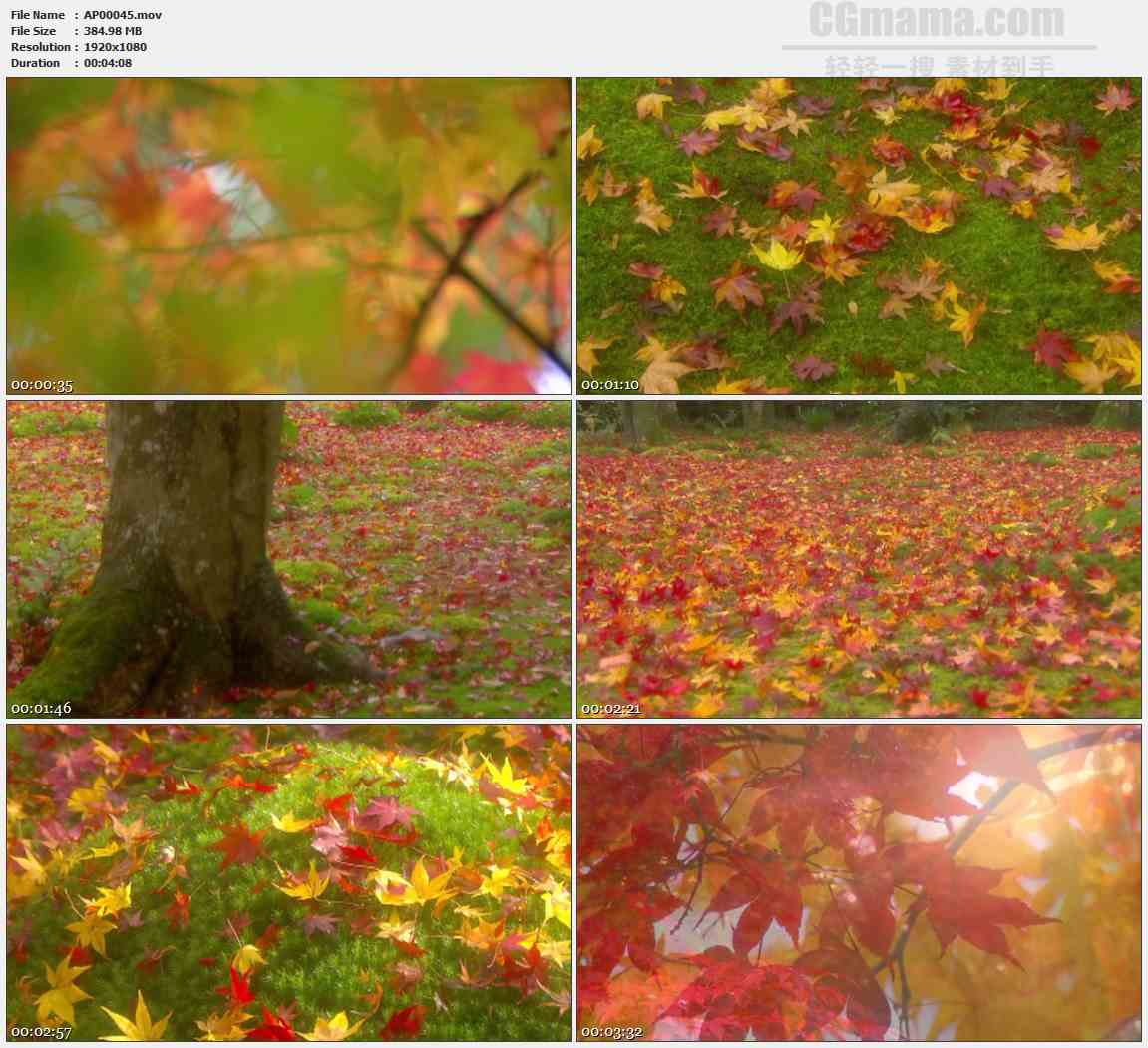 AP00045-梦幻红色枫叶高清实拍视频素材