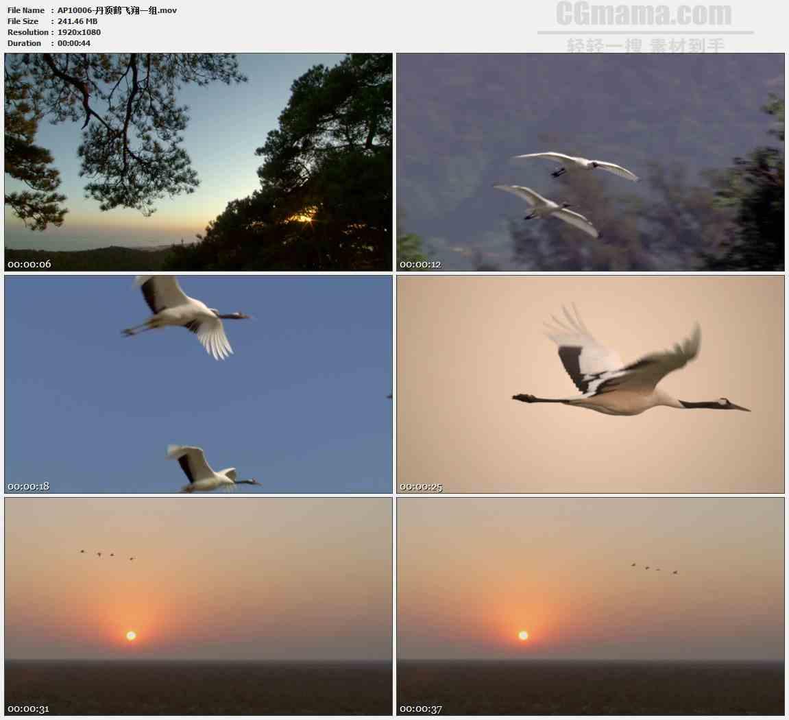 AP10006-森林仙鹤大雁飞舞飞翔高清实拍视频素材