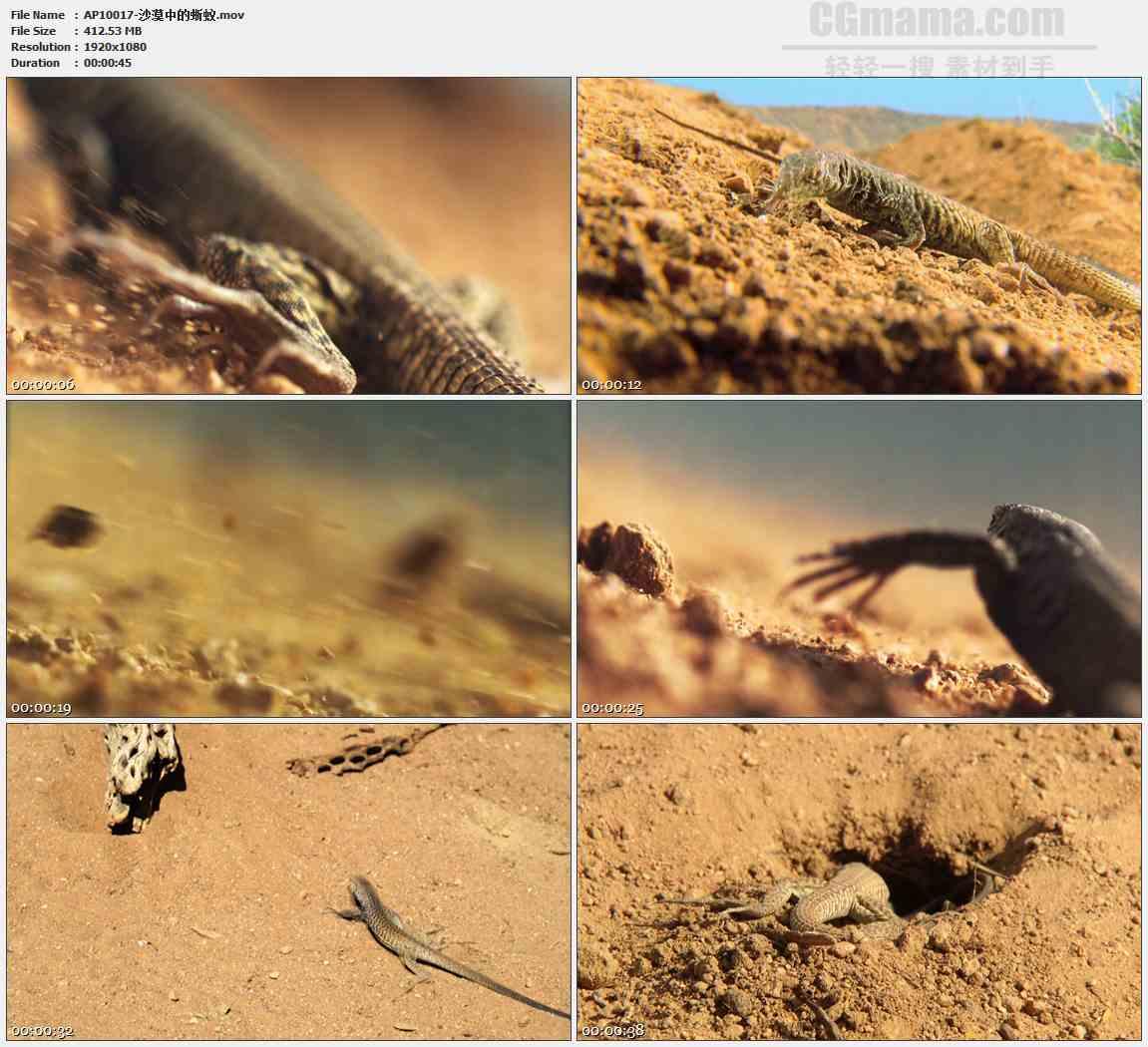 AP10017-蜥蜴爬行呼吸吐舌特写高清实拍视频素材