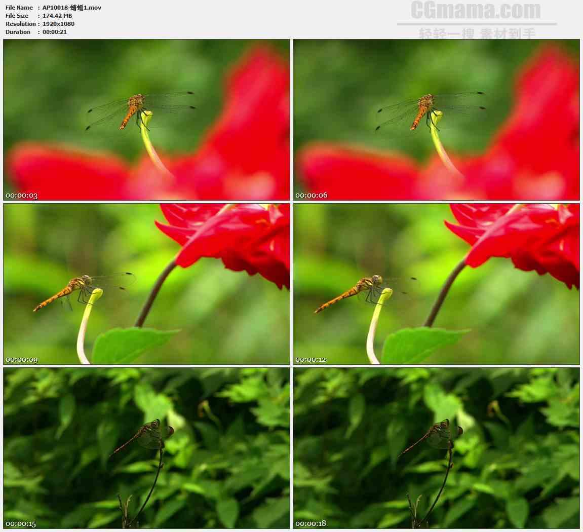 AP10018-蜻蜓停留在树枝头高清实拍视频素材