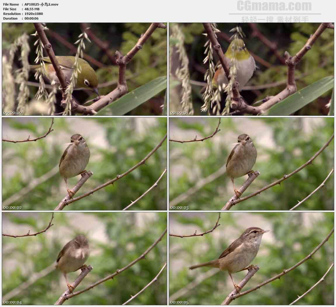 AP10025-小鸟捕食蛾子高清实拍视频素材